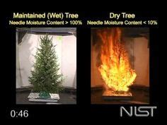1000 Images About Christmas Tree Watering System On Tree Lights Safety