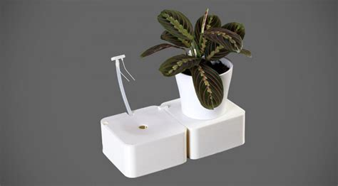 aquarius    water  plants