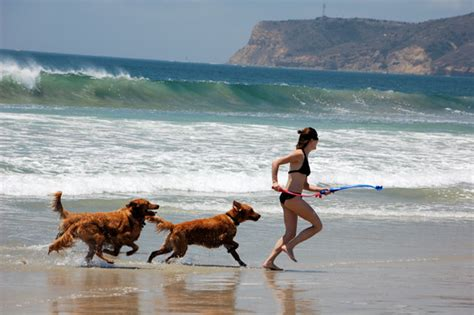friendly beaches san diego 3 best pet friendly vacation spots