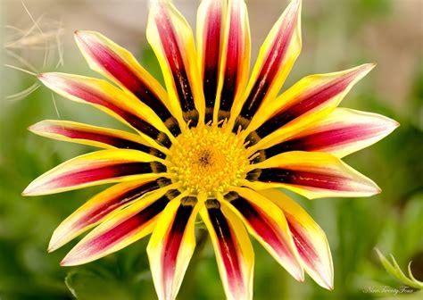 Beautiful Flower Pictures by Beautiful Flowers Macro Ninetwentyfour Photography