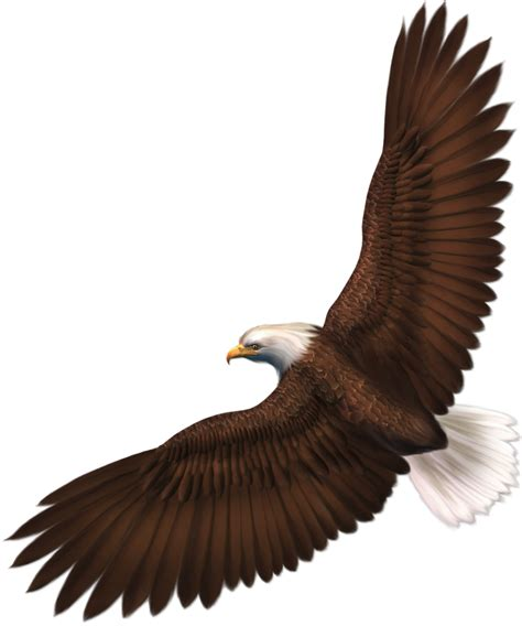 imagenes png aguila eagle clipart transparent background pencil and in color