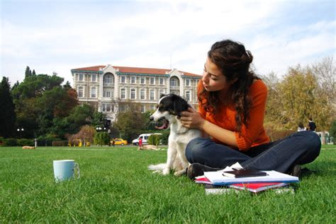 colleges that allow dogs colleges opening their doors to pets