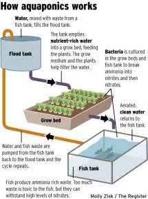 Aquaponic How To : My Diy Aquaponics System