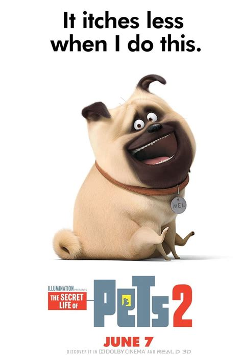 secret life  pets  dvd release date redbox