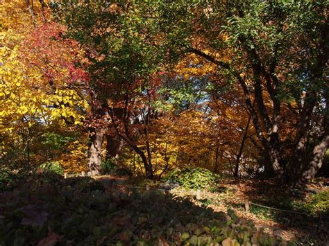 Mn Landscape Arboretum Fall Colors 1000 Images About Gardens On On