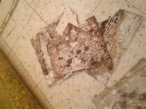 asbestos tile linoleum flooring asbestos linoleum flooring