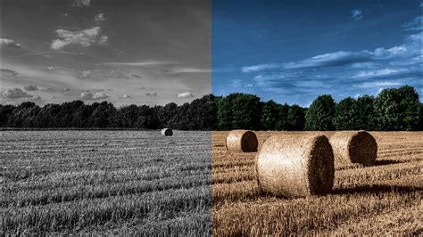 color black and white photos how to use photoshop to colorize a black and white photo