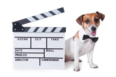 all famous dog names from tv movies politics books and can you name the most famous dogs in movie history page