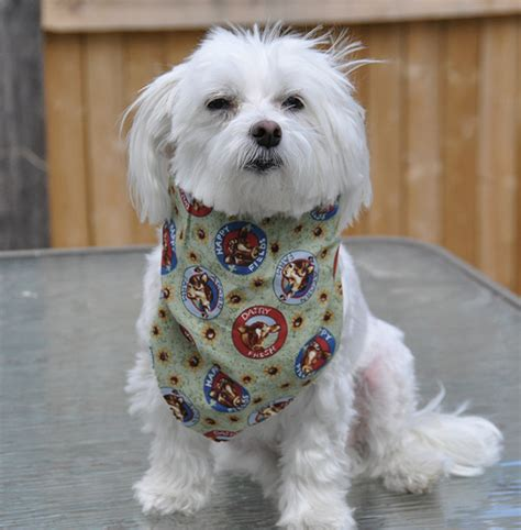 Freekibble Giveaway - lucky the maltese 4 the love of animals