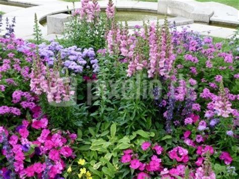 Garten Anlegen Bilder 3374 kostenloses foto staudengarten 2 pixelio de