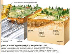 Landscape Ecology Definition Biology Landscape Definition In Biology 28 Images