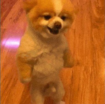 my pomeranian is acting strange 17 gifs that were not to find