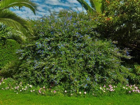 venta de plantas para jardin jard 237 n los agapantos venta de plantas en la serena