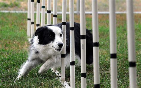 agility for dogs agility centro cinofilo roma
