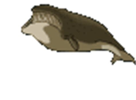 imagenes navideñas gif animadas gifs de ballenas en el mar animadas