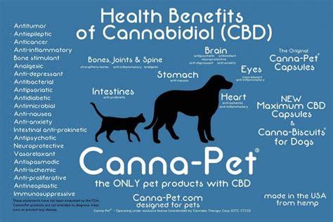 cbd treats cbd and pet treats for compassionate cannabis pets cbd dogs cbd