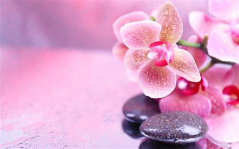 flower zen wallpaper flowers stones orchid spa pink zen wallpapers