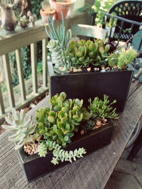 how to display succulents 30 cute exles digsdigs