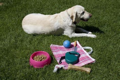eliminare i gatti dal giardino come eliminare le erbacce dal giardino soluzioni di casa