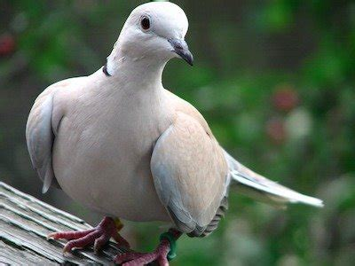Tesla Married A Pigeon Who Was Nikola Tesla A Biography Of The Inventor