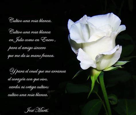 rosa blanca rose blanche cultivo una rosa blanca de jos 233 mart 237 poemas favoritos de pap 225