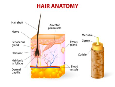 what is a made of what is hair made of keratin