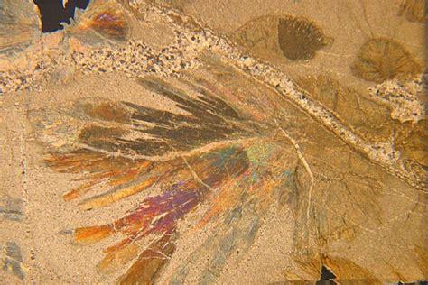 wollastonite thin section wollastonite skarn spiaggia nero isle of elba thin
