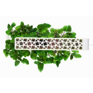 Click And Grow Amazon by Click Amp Grow Smart Herb Garden Indoor Grow Kit With 3