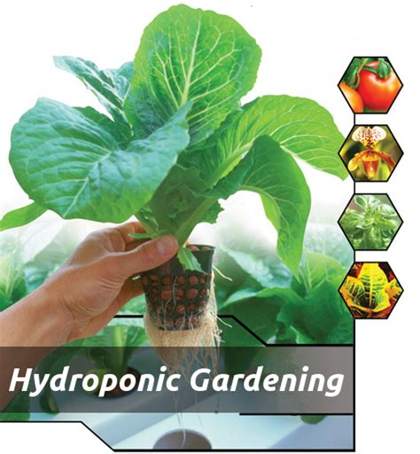 Amazing Backyards how to grow hydroponically olivia s solutions inc