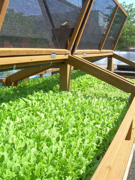 raised bed greenhouse 19 best images about mini greenhouses on pinterest pvc