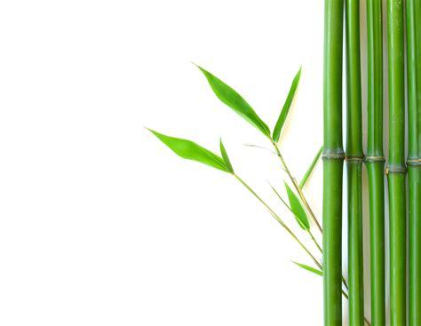 bamboo clip bamboo cliparts