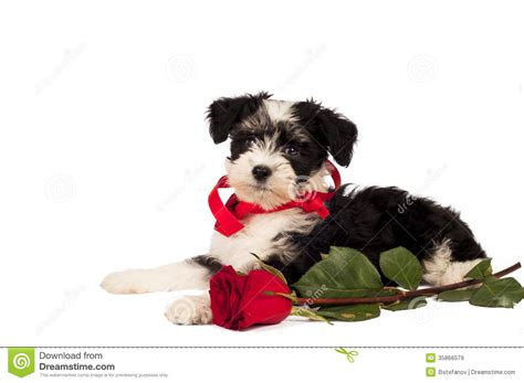 puppy present puppy for present royalty free stock images image 35866579