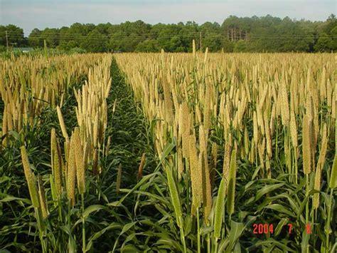 Everclear Detox by Grain In Care Pics