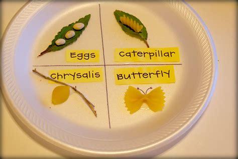 kindergarten tales life cycles