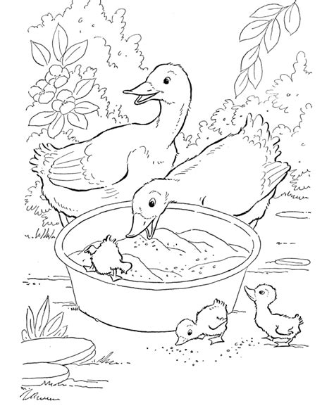 duck coloring page free free printable duck coloring pages for kids