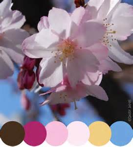 cherry blossom color janie color inspiration cherry blossoms