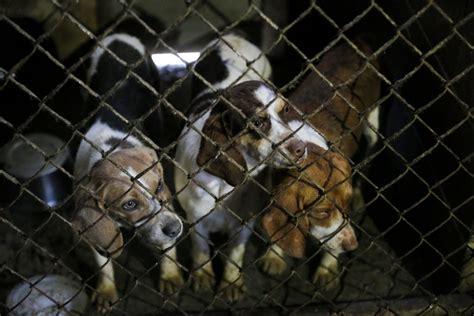 puppies in arkansas shut puppy mills huffpost