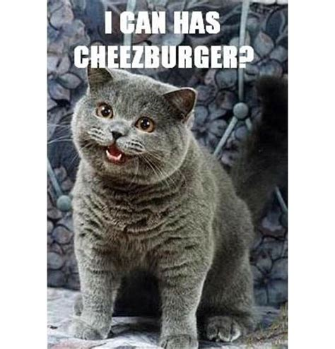Cheezburger Cat Meme - first internet meme memes