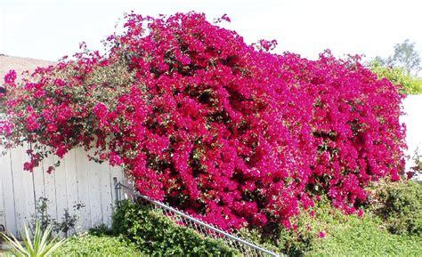 Jingga Flower Bag utikouw s kembang kertas