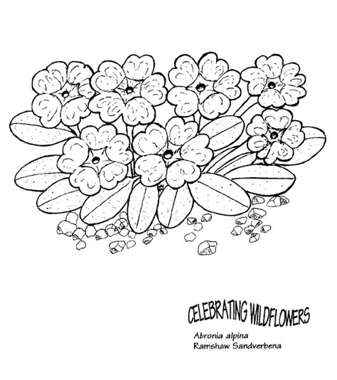 coloring pictures of wildflowers wildflower coloring download wildflower coloring