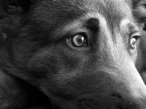 are dogs colorblind are dogs colorblind pet care facts