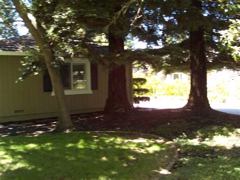 redwood trees next to house feng shui at forum geomancy net
