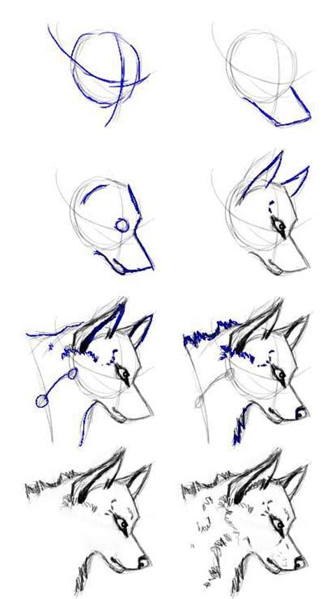 werewolf head tutorial wolf head tutorial by nitance on deviantart