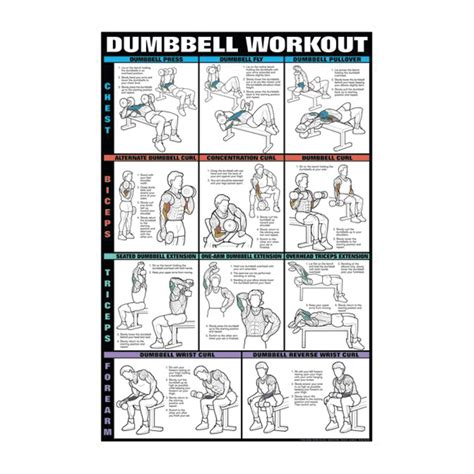 dumbell workout 1 chest biceps triceps and forearms 11