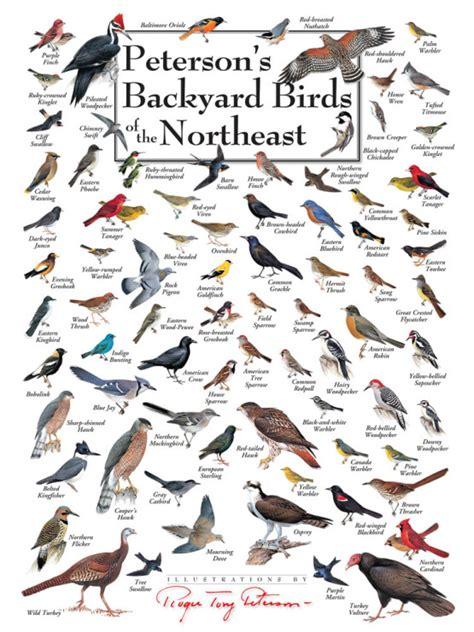 Backyard Identification peterson s backyard birds puzzles jigsaw puzzles