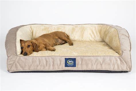 kong lounger dog bed big dog beds walmart memory foam pet bed for large dogs
