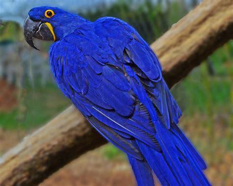 blue parrot photograph by jack moskovita