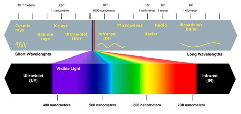 what do the different colors of visible light represent why are plants green