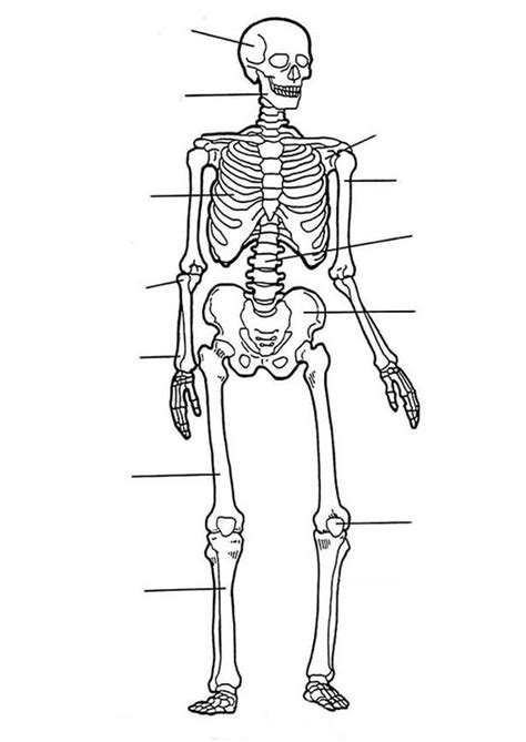 human anatomy nose coloring pages bulk color coloring page anatomy skeleton coloring pages coloring page