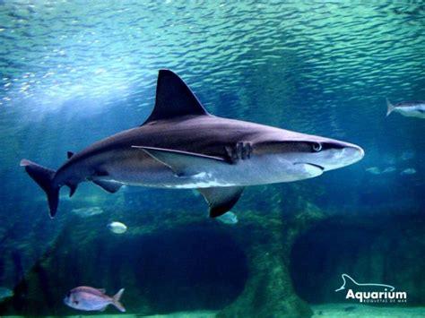 imagenes variadas de toda clase ranking de todas las clases de tibur 243 nes listas en
